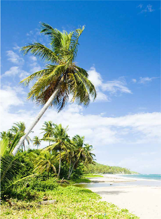 Resources for Foreign Investors - Grenada.