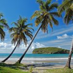 Beautiful secluded beach with palm trees on Grenada Island.
